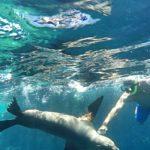 lobo-marino